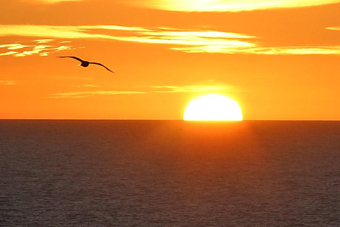 Bildergebnis für Vogel Sonnenuntergang